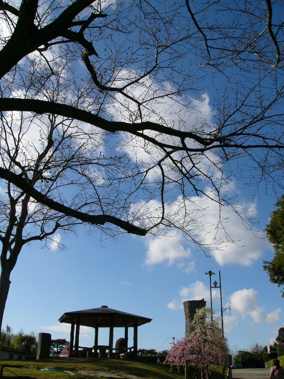 pohon tanpa daun in islamologi renungan on februari 24 2007 at 12 27 ...